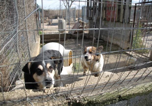 Animali: a Trani cani deportati nei lager. M5S diffida i sindaci