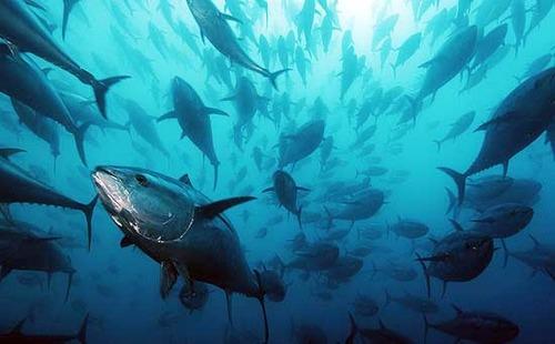 """Pesca, """"Più sostenibile grazie a M5S. Pd dice no a incentivi su 'rifiuti pescati'"""""""